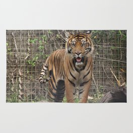 Prowling Tiger Rug