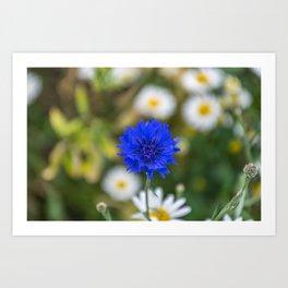 Just a blue flower Art Print