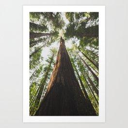 A Big Hendy Woods Redwood Art Print