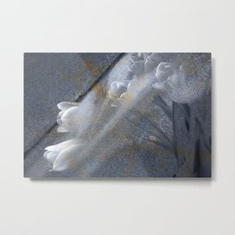 Tulips Emerging in Grey and White Metal Print