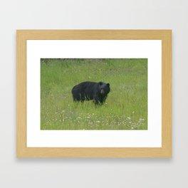 Black Bear! Framed Art Print