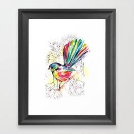 Vibrant Fantail Framed Art Print