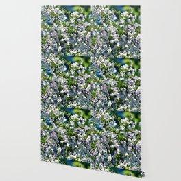 #239 Wallpaper