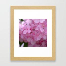 Pink Hydrangea - Flower Photography Framed Art Print