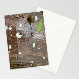 Touch of greenTree Bark Study Stationery Cards