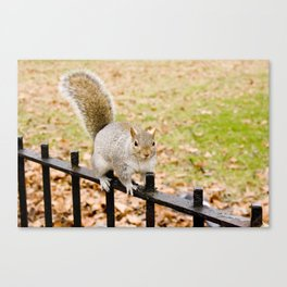 Barry the squirrel Canvas Print