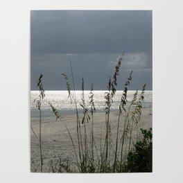 Lit Up Sea Oats Poster