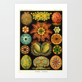 Ernst Haeckl Art Print