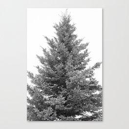 B&W White Spruce Canvas Print