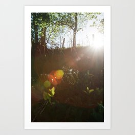 Lee Wood Art Print