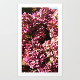 Hydrangea patterns III Art Print