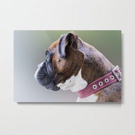 Boxer Boy Dog Metal Print