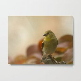 Friends of a Feather #2 Metal Print