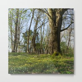 Beneath the Beech Metal Print