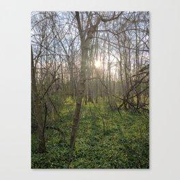 White Clay Super Bloom Canvas Print