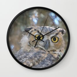 Young Owl at Noon Wall Clock
