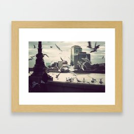 Pigeon Whisper    Framed Art Print