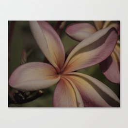 Regular Fangipani Canvas Print