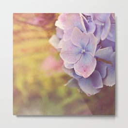 Purple Hydrangea flower. Metal Print