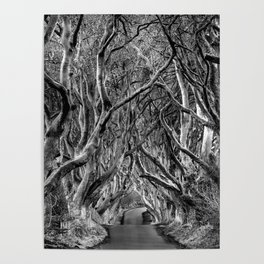 Avenue of trees Poster