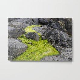 Algae Creek Metal Print