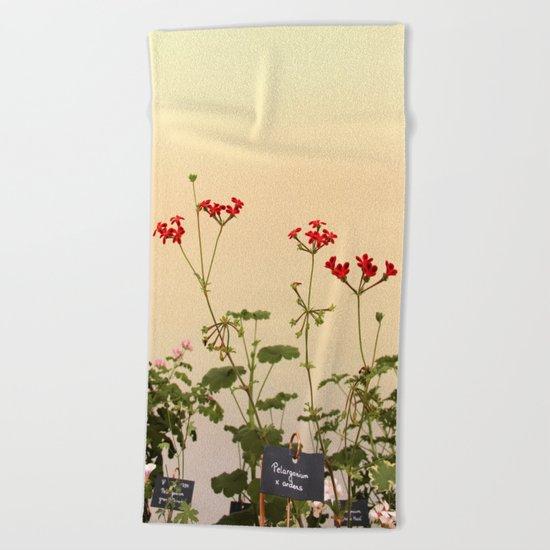 Geraniums (Pelargonium) #6 Beach Towel