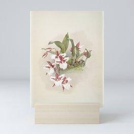 Odontoglossum rossii from Reichenbachia Orchids (1888-1894) by Frederick Sander (1847-1920) Mini Art Print
