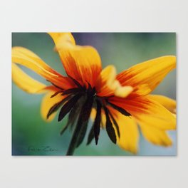 Bee's Eye view of a Black-eyed Susan Canvas Print