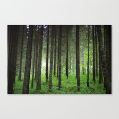 Woods. Canvas Print