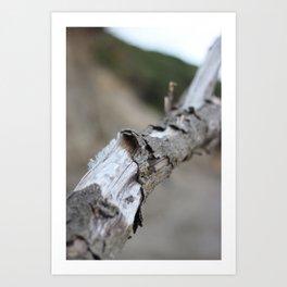 Moeraki Branches (3) Art Print