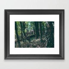 Secret Forest Framed Art Print