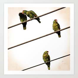 Parroting Up Art Print