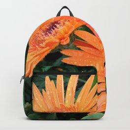 Orange Gerber Daisies in Bloom Backpack