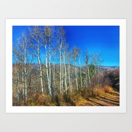 Aspens on Red Mountain - Glenwood Springs, CO Art Print