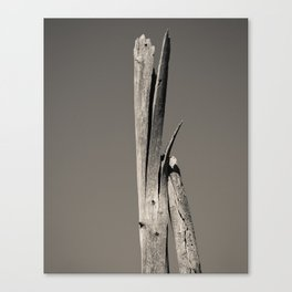 The Gradient in the Bark Canvas Print