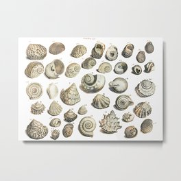 Sea Shells from Gentlemens Magazine 1755 Metal Print