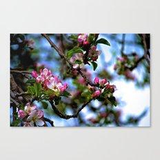 Future Apples Canvas Print