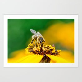 A bee on the flower Art Print