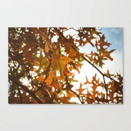 sun through autumn leaves Canvas Print