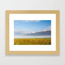 Morass grass in sun rising Framed Art Print
