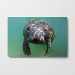 Little Manatee Metal Print