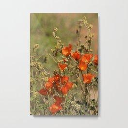 Desert Wildflower - 4 Metal Print