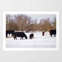 Cows in Snow Art Print