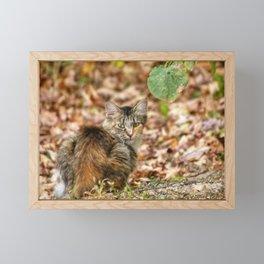 Autumn Cat Framed Mini Art Print