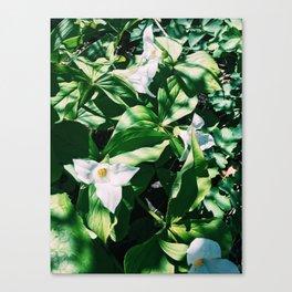 Garden Lilys Canvas Print