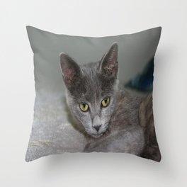 Beautiful Portrait of A Grey Russian Cross Tabby Cat  Throw Pillow