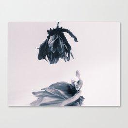 Fading Away II Canvas Print