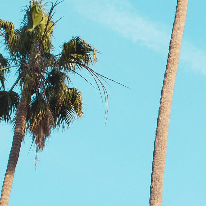Palm Tree Sunshine Leggings