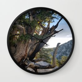 Ancient Bristlecone Pine Forest #3 Wall Clock
