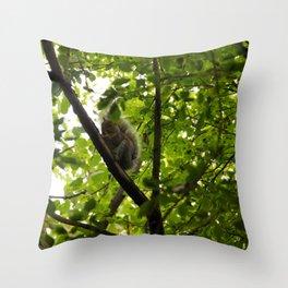 Peek a boo Squirrel Throw Pillow